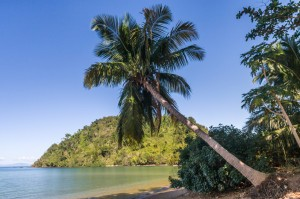 Picture of tropical beach.