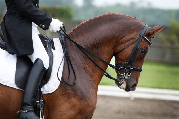 Picture of a rider on horse