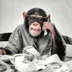 Picture of chimp working at desk