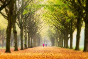 Picture of showing elderly couple walking in the forest for retirement spending blog post