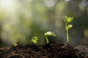 good small business opportunities often start small--like a new plant sprouting up.